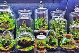 transform a living space with the addition of small indoor garden in form glass plant terrarium