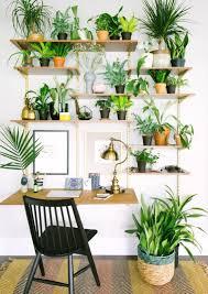 Best 25 Plant Shelves Ideas On Pinterest Plant Wall Indoor Plant Shelf