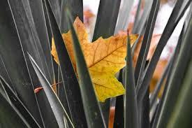 Resultado de imagen para hojas escondidas