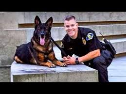 Animal Cop Police Dog Shot In Line Of Duty Reunited With Cop Good Morning America Abc News
