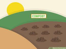 image titled plant arugula step 11