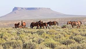 Image result for wild horses images