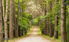Atatürk Arboretumu Giriş Ücreti 2020 | Hakkında Bilgiler » GEZGİN SİTESİ