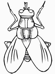 Bug Food Coloring Starbucks Archives Printable Coloring Pages