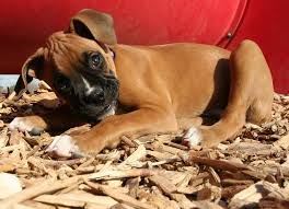 3 best beddings for your dog house