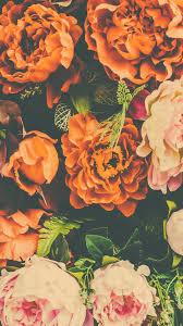 Orange Flower iPhone Wallpapers - Top ...