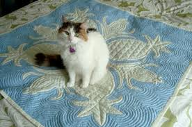 Say 'Aloha' to Hand Appliqué: Hawaiian Quilts & quilt Adamdwight.com