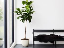 modern office plants. 8 Best Indoor Plants \u0026 How To Take Care Of Them Modern Office C