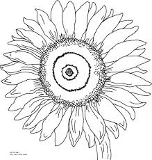 Small Picture Sunflower Outline Drawing 11 Pics Of Coloring Page Sunflower