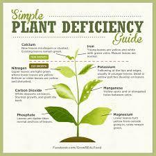 Identifying Plant Nutrient Deficiencies Grow Real Food