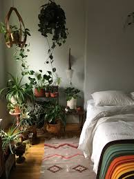 lighting for houseplants. Caring For Indoor Plants In Low-Light Conditions Lighting Houseplants N