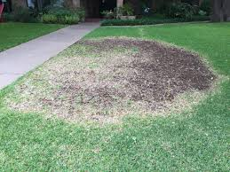 Brown Patch Disease Dirt Doctor Library Topics