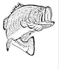 Small Picture Bass Fish Coloring Pages Es Coloring Pages