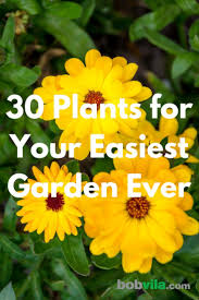 I know everyone is worried about box blight and box tree caterpillar, but my box plants go on and on in their pots. Low Maintenance Plants 30 Easy Options For Your Garden Bob Vila