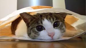 「猫 癒される画像」の画像検索結果