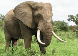 essay on shooting an elephant co essay