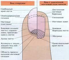 Реферат Заболевания ногтей и кожи ног com Банк  Заболевания ногтей и кожи ног