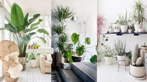Interior Design Plants Inside House The Best Indoor Plants For Interior Decoration Tarun Das