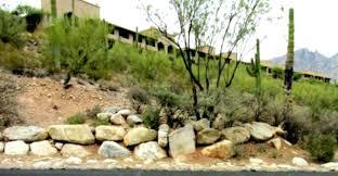 Round rock gardens Cactus Round Rock Landscape Round Rock Gardens Design Ideas Team Fan Girl Round Rock Landscape Round Rock Gardens Design Ideas Lookasquirrelco