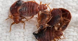 Here Are Canadas Top 10 Bed Bug Infested Cities Globalnews Ca