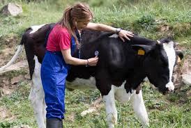 """Résultat de recherche d'images pour """"vétérinaire rural"""""""
