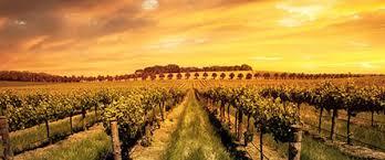"""mclaren vale wine""的图片搜索结果"