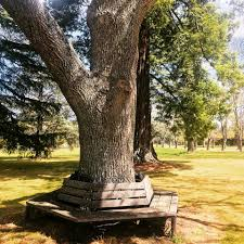 outdoor office space. Image May Contain: Tree, Plant, Sky, Grass, Shoes, Outdoor And Office Space