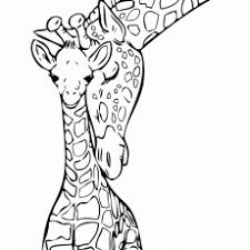 Splendid Design Inspiration Giraffe Coloring Pages For Adults Baby
