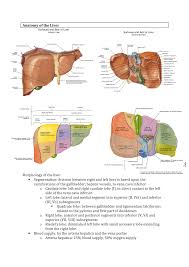 Liver Anatomy Notes Learning Stage Surgery Liver Anatomy Lecture 1 Vu