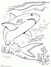 Kleurplaten Haai Kleurplaten Kleurplaatnl