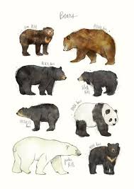 Grizzly Bear Classification Chart