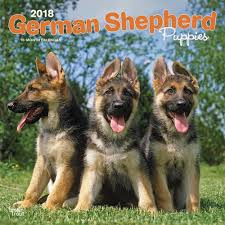german shepherd puppies wall calendar calendars books gifts