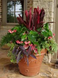 558 Best Shade Containers Images On Pinterest  Shade Garden Container Garden Shade Plants