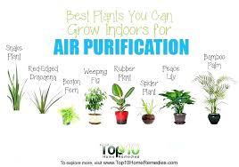office plants no light. Best Indoor Office Plants Good You Can Grow Indoors . No Light S