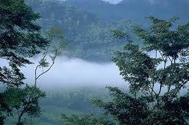 tropical rainforest raining. Wonderful Tropical Art Explosion Rain  For Tropical Rainforest Raining H