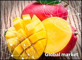 Mango Usa Size Chart Overview Global Mango Market