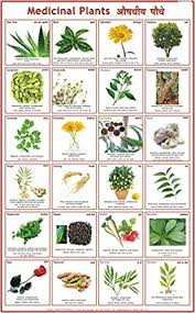 Plant Chart Buy Medicinal Plants Chart Book Online At Low Prices In