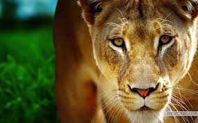 beautiful hd wallpapers of animals. Simple Animals Beautiful Animal Wallpapers In Hd Of Animals S