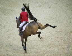 Wat Te Doen Als Je Paard Stout Is Bit Magazine