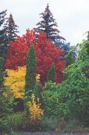 Ботанический сад >> ХНУ имени В Н Каразина Ботанический сад университета является научно исследовательским природоохранным учреждением цель которого сохранение изучение интродукция