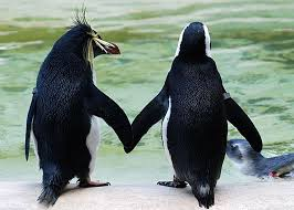 two penguins holding hands. Plain Holding To Two Penguins Holding Hands