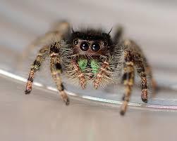 farmapest örümcek resimleri ile ilgili görsel sonucu