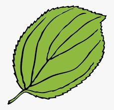 transpa leaf clip art apple tree