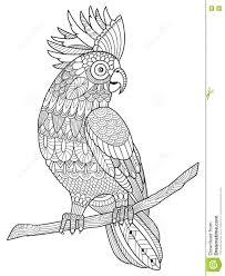 Coloriage D Un Perroquet Pour Adulte