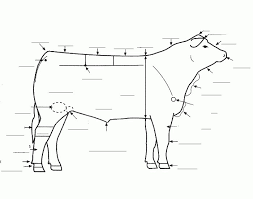 Cow Parts Chart Cow Parts Diagram Wiring Diagrams