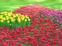 flowers garden. Flower Garden Landscape Ideas \u003e\u003e\u003e Check Out This Great Product.(This Is Flowers