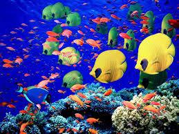 Live Aquarium Wallpapers For Windows 8 1 1600x1200 470 07 Kb
