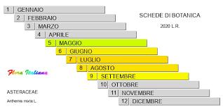 Anthemis mixta [Camomilla bicolore] - Flora Italiana