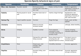 Pain Management In Exotic Species Vetbloom Blog