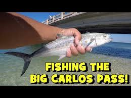 Fishing The Clear Waters Of The Big Carlos Pass Lots Of